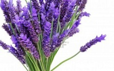 Six Powerful Ways To Use Lavender During The Cold And Flu Season